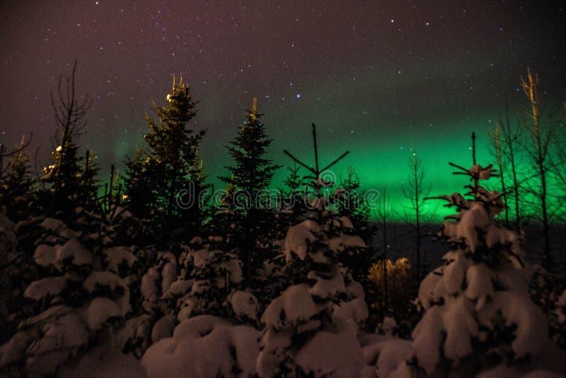De lichten van Aurora Borealis /Northern boven Ijslands sneeuw behandeld bos royalty-vrije stock fotografie