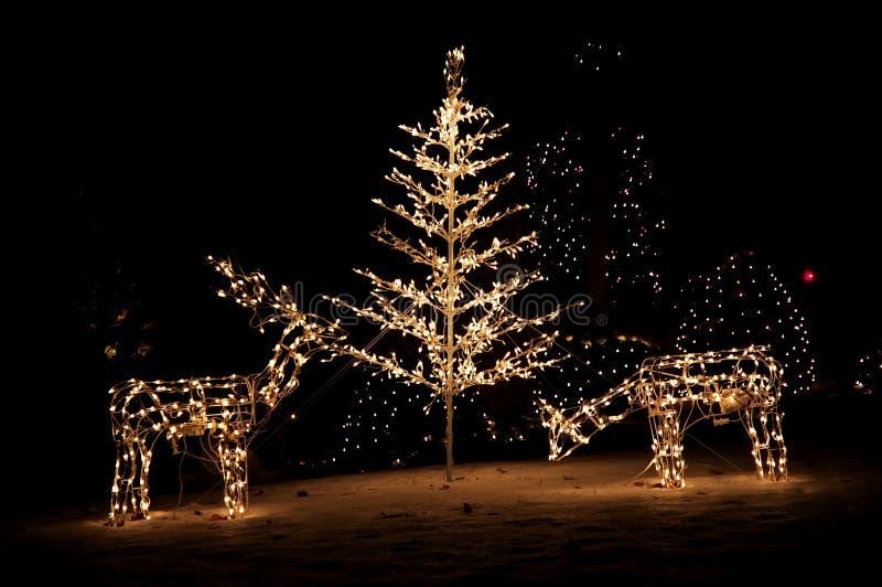 De Lichten van de Werf van Kerstmis stock foto
