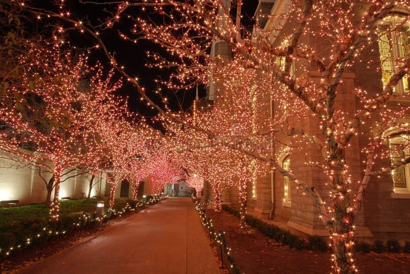 De lichten van Kerstmis in de nacht royalty-vrije stock fotografie