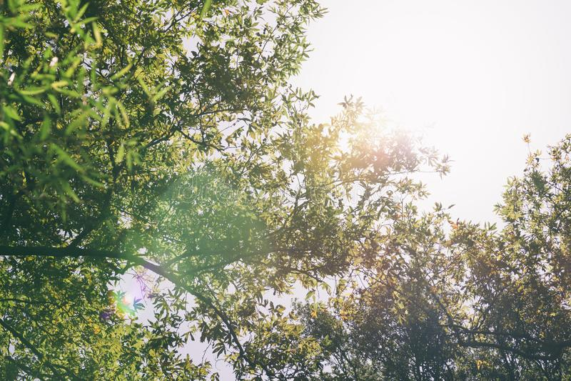 De lichtstralen schieten groene en gele bladeren weg royalty-vrije stock foto's