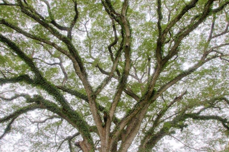 De lidmaten van de boom stock afbeelding