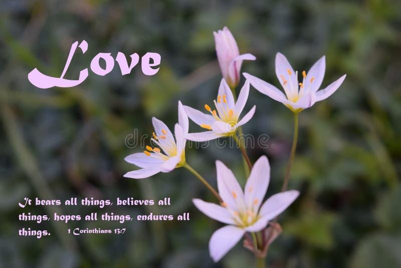 De liefde draagt alle dingen Inspirational bijbelvers met mooie uiterst kleine onkruidbloemen royalty-vrije stock afbeeldingen