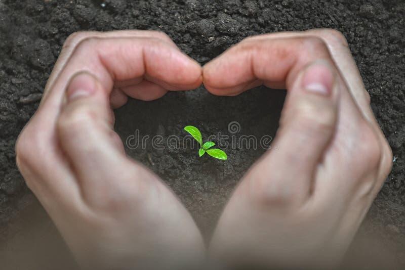 De liefde en beschermt aard Vrouwenhanden die een hartvorm vormen rond een kleine installatie Ecologie en zorgconcept royalty-vrije stock foto