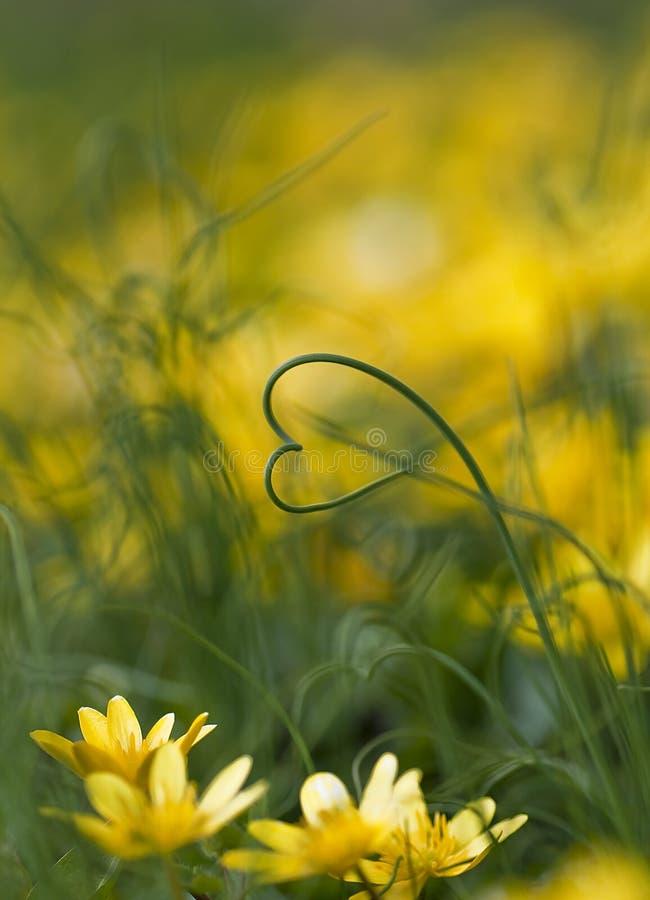 De liefde van de tuin stock fotografie