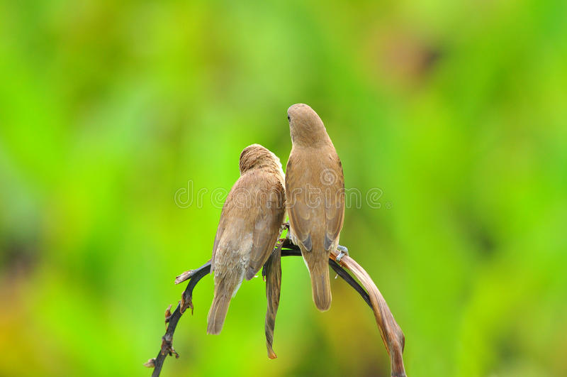 De liefde van de vogel royalty-vrije stock afbeeldingen