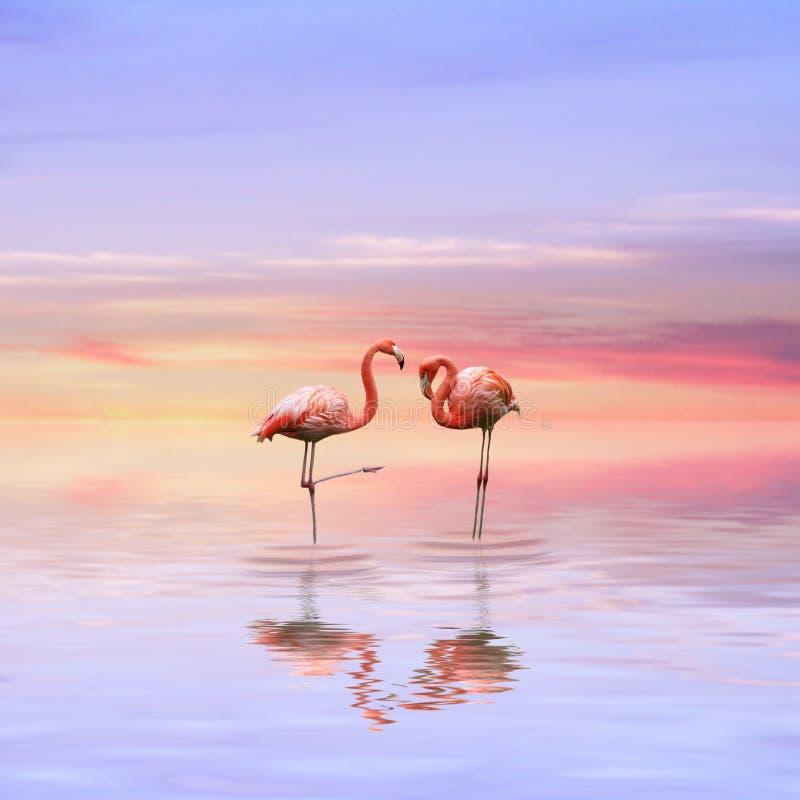 De liefde van flamingo's stock afbeeldingen