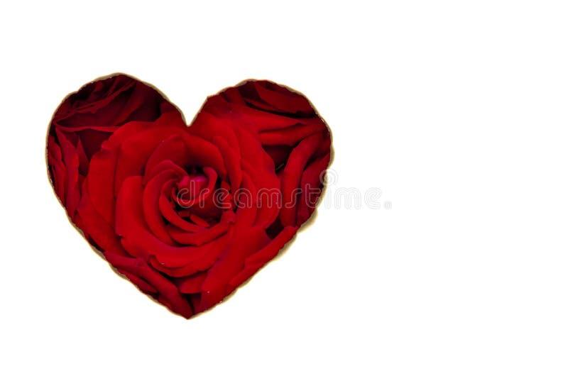 De liefdevorm van het rode kleurenhart dat rode kleurenrozen binnen heeft stock foto