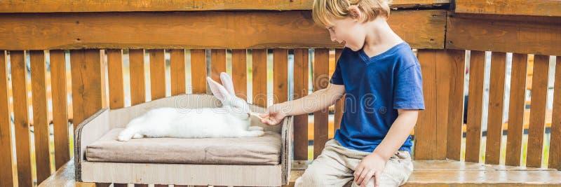 De liefkozingen van de peuterjongen en het spelen met konijn in de petting dierentuin concept duurzaamheid, liefde van aard, eerb royalty-vrije stock foto's