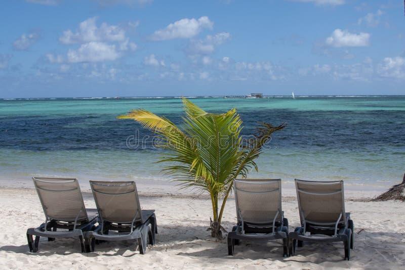 De ligstoelen zitten naast een palm op een wit zandstrand stock foto's