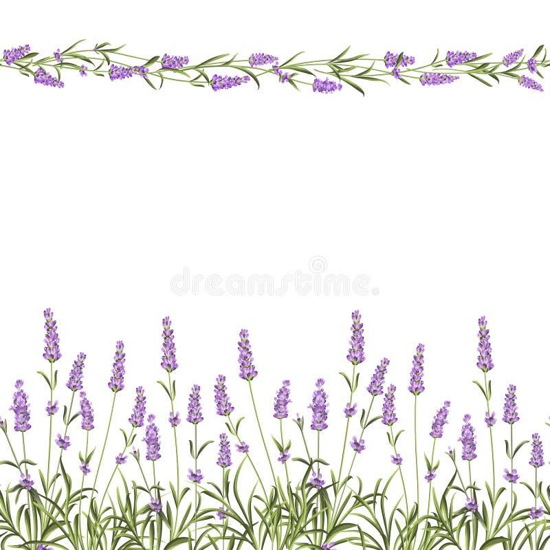 De lijn van het Lavendel Naadloze kader stock illustratie