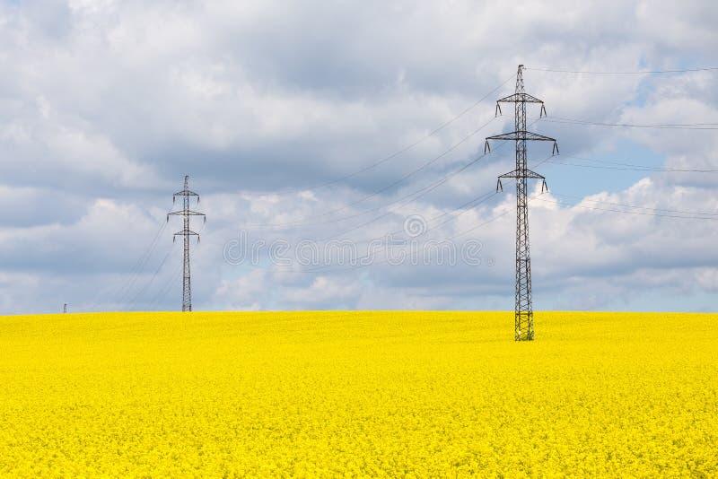 De lijnen van de hoogspanningsmacht boven Brassica van het raapzaadgebied napus royalty-vrije stock foto's