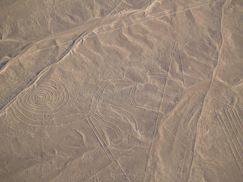 De Lijnen van Nazca (Aap) stock foto