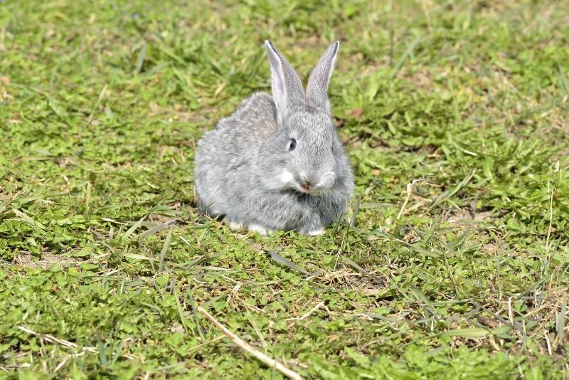 De lilla kaninerna som utomhus sitter i vår fotografering för bildbyråer