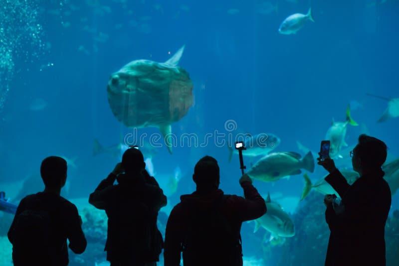 De Lissabon Lissabons Oceanarium Oceanario in Lissabon, Portugal stockfotografie