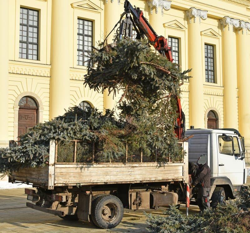 De logboeklader laadt een vrachtwagen met pijnboomtakken royalty-vrije stock foto's