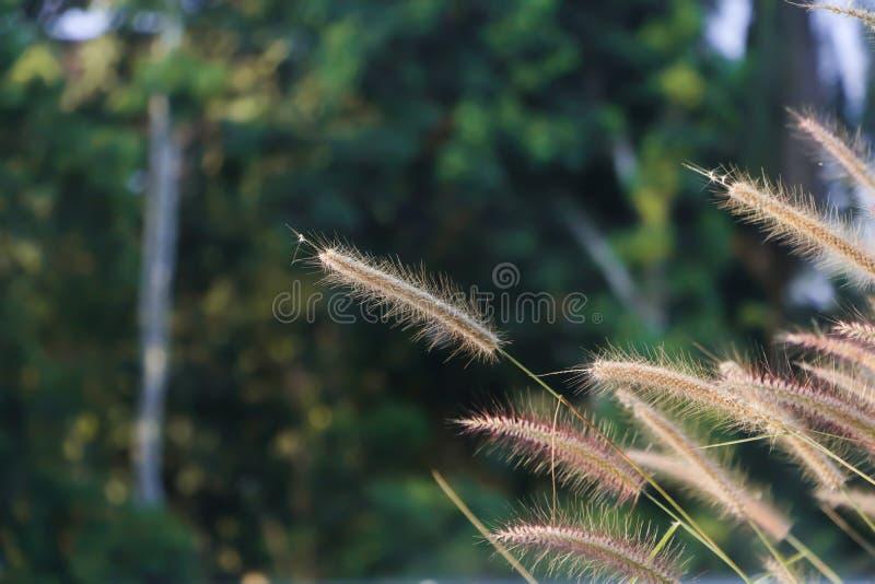 De lokale bloemen op bosachtergrond stock foto