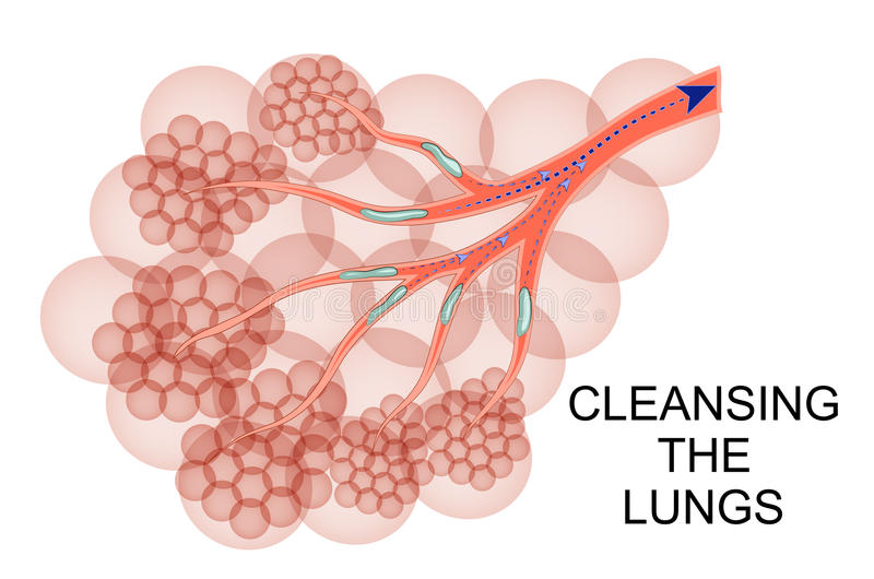 De longen een proces van reiniging van slijm royalty-vrije illustratie