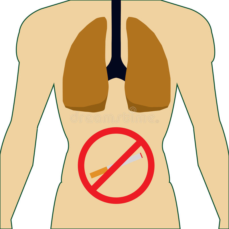 De longen van het menselijke lichaam Nr dat - rookt Geen sigaret stock illustratie
