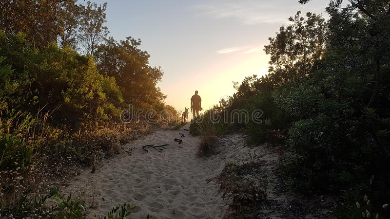 De Looppas van de ochtendhond stock foto