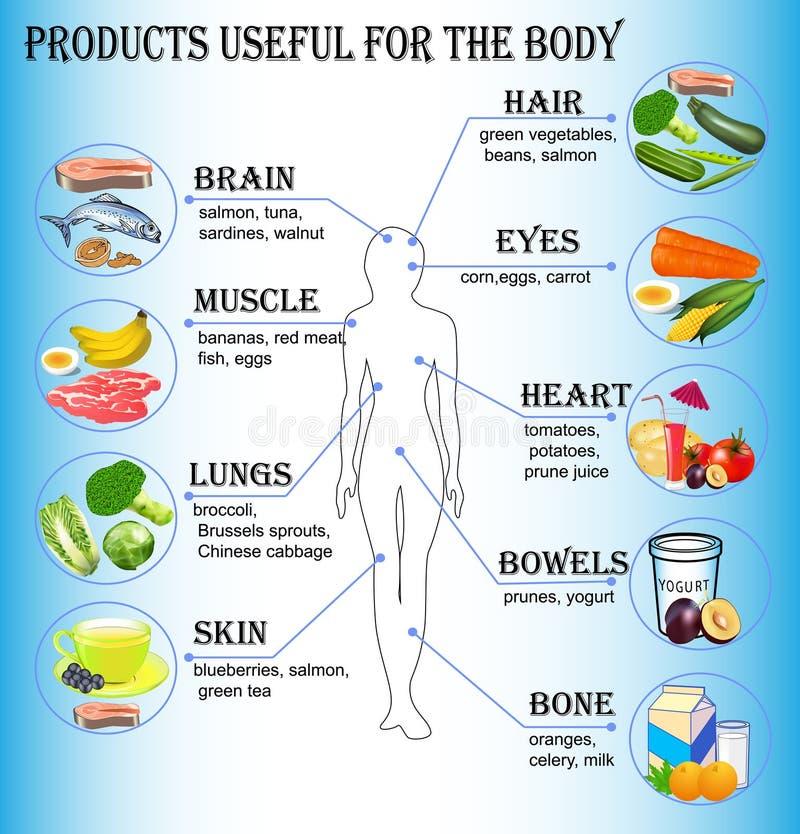 De los productos útiles para el cuerpo humano foto de archivo