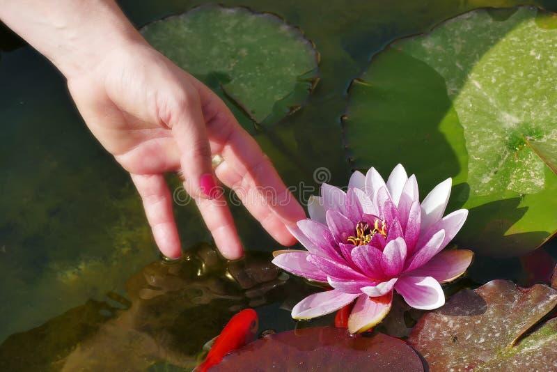 de lotusbloem van handaanrakingen royalty-vrije stock afbeelding