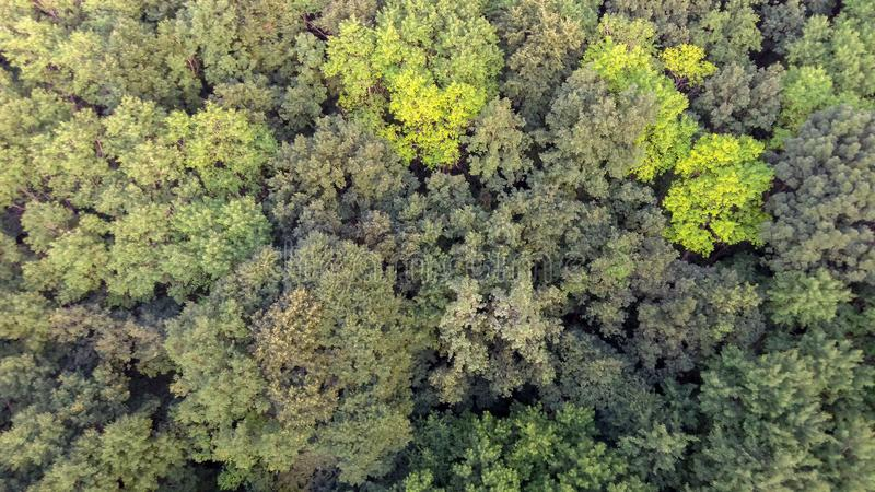 De lucht bos Natuurlijke groene achtergrond van de meningslente royalty-vrije stock afbeelding