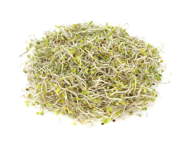 De lucht Spruiten van de Broccoli van de Mening Organische royalty-vrije stock afbeelding