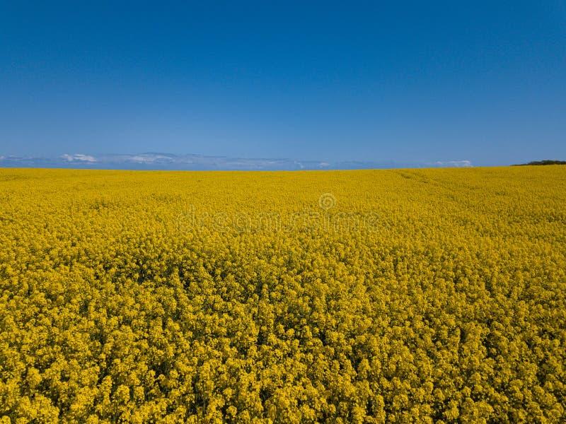 De luchthommel vangt beeld van briljant helder geel raapzaadgebied en blauwe hemelhorizon stock foto