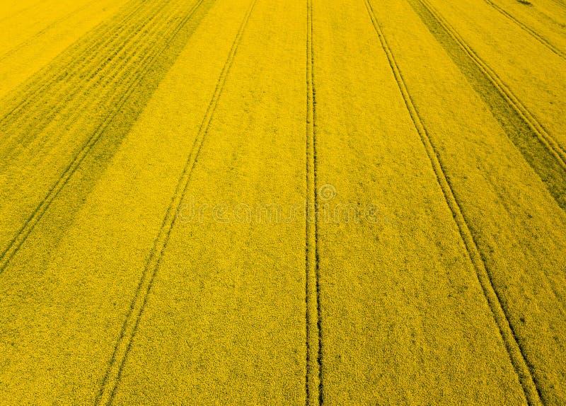 De luchthommel vangt beeld van briljant helder geel raapzaadgebied stock foto's