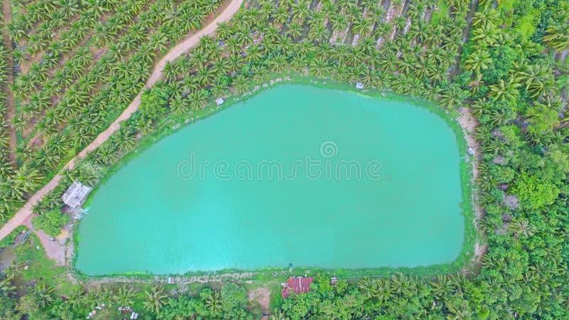 De luchtmening van meer van de hommel met professionele camera neemt beelden van het meer in bos royalty-vrije stock foto