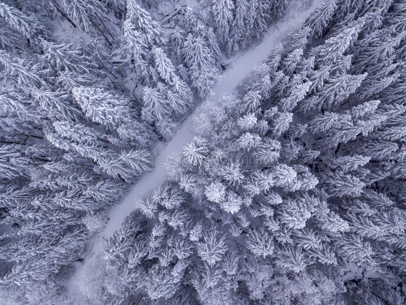 De luchtmening van sneeuw behandelde bomen en de sneeuw behandelde weg in stock afbeeldingen