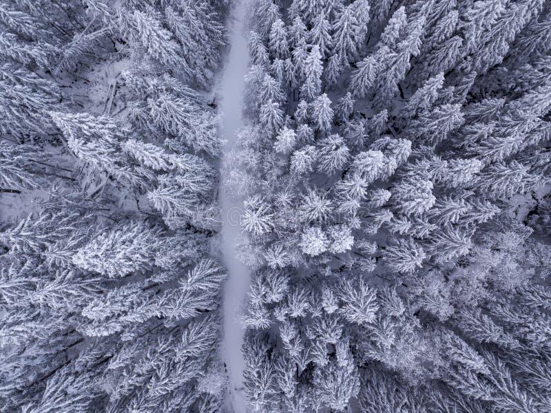 De luchtmening van sneeuw behandelde bomen en de sneeuw behandelde weg in stock foto's