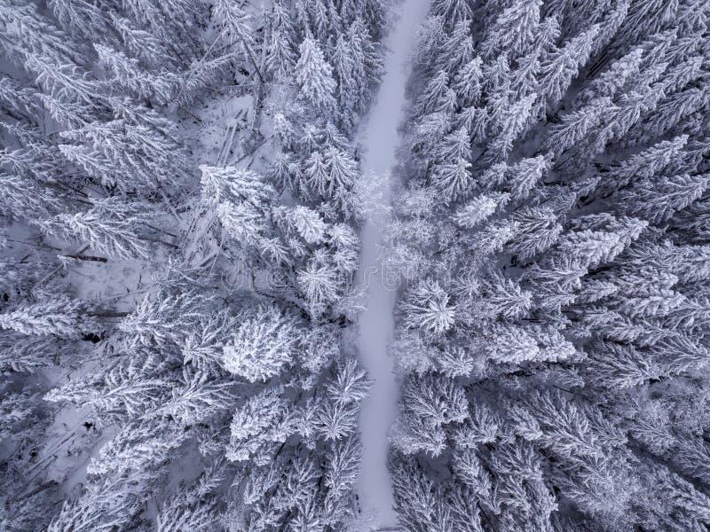 De luchtmening van sneeuw behandelde bomen en de sneeuw behandelde weg in royalty-vrije stock foto