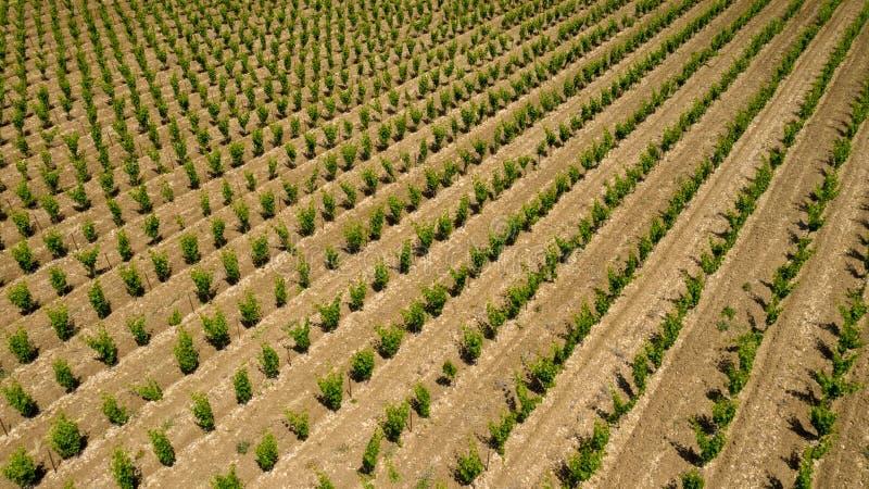 De luchtmening van de wijngaard stock afbeelding