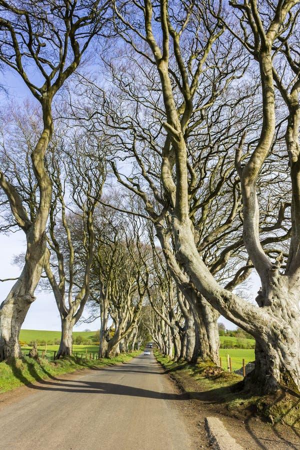 De mörka häckarna som är nordliga - Irland arkivbild