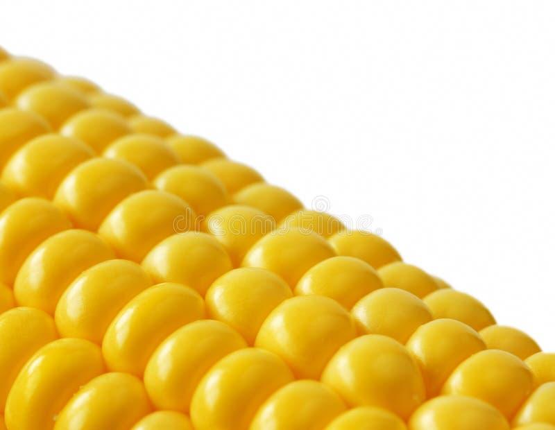 De maïskolf van de close-upsuikermaïs op wit stock afbeelding
