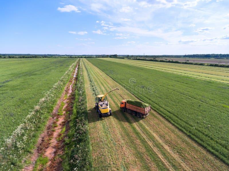 De maaimachine giet kuilvoeder in spooraanhangwagen Het werk is op eindeloos gebied tijdens oogsttijd Het groene veevoeder moet k stock foto's