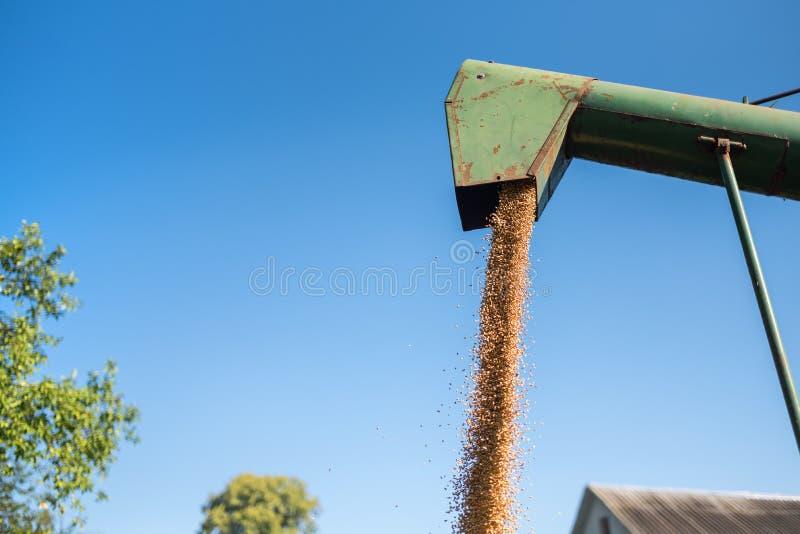 De maaimachine giet tarwe in een blad, het de tijd van ` s om tarwe, de Oekraïne te oogsten stock fotografie
