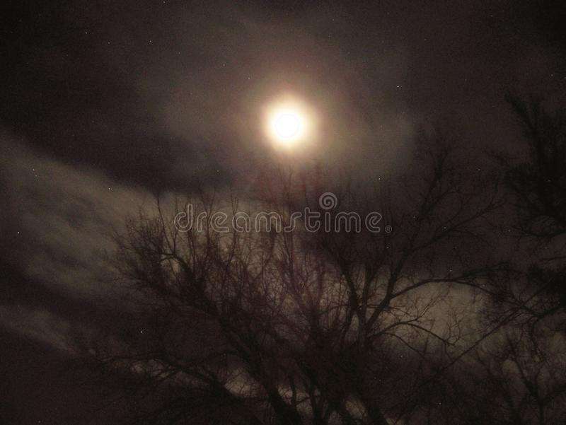 De maan & de bomen royalty-vrije stock foto's