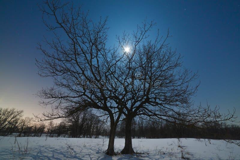 De maan glanst door de takken van een boom royalty-vrije stock foto