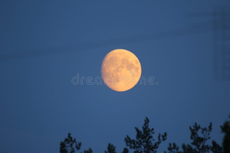 De maan op een zeer donkere hemel in de zomer stock fotografie