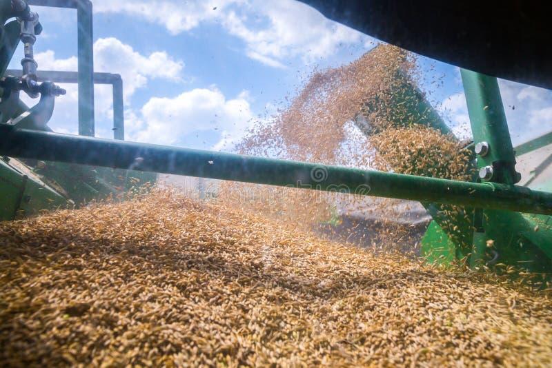 De machine om korrelgewassen te oogsten - maaidorser in actie betreffende roggegebied bij zonnige de zomerdag De korrel die enkel royalty-vrije stock afbeeldingen