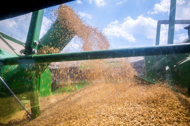 De machine om korrelgewassen te oogsten - maaidorser in actie betreffende roggegebied bij zonnige de zomerdag De korrel die enkel stock foto