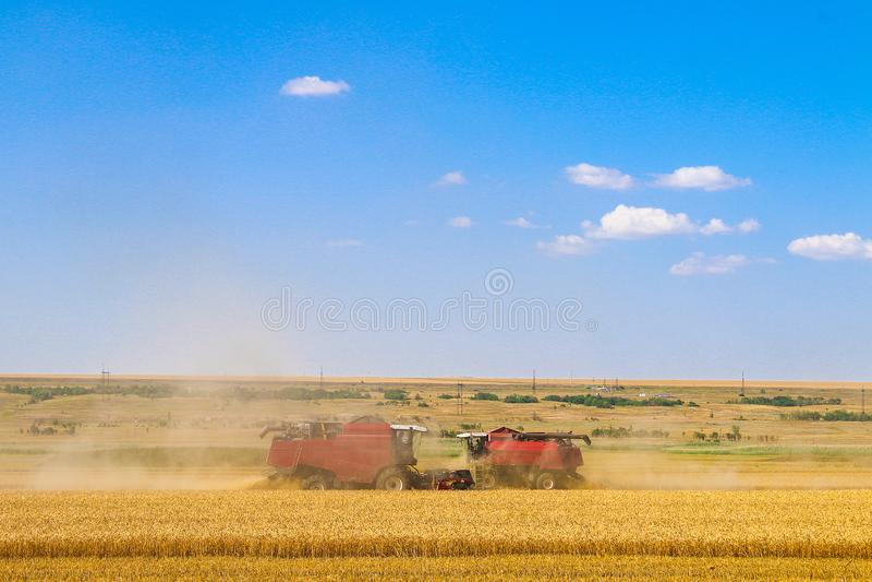 De machine van de maaidorserlandbouw het oogsten gouden rijp tarwegebied royalty-vrije stock afbeelding