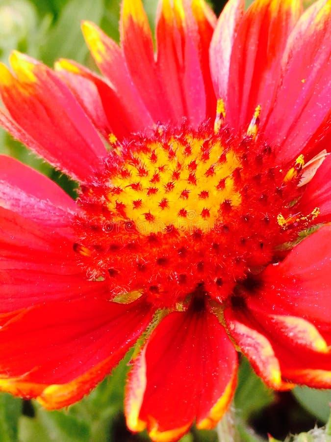 De macro brengt de schoonheid uit stock fotografie