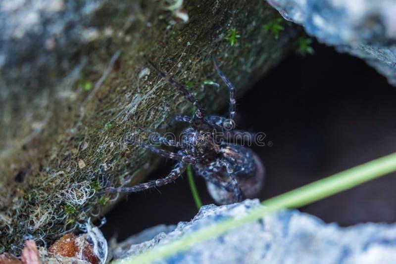 De macro die van het mooie spin wachtende slachtoffer wordt geschoten in zijn gat in het zonnige de zomerweer royalty-vrije stock fotografie