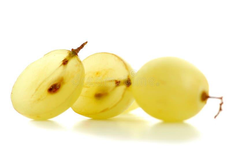 De macro van druiven stock fotografie