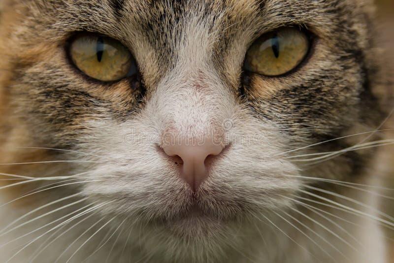 De macro van het kattengezicht de kat ziet eruit stock foto's