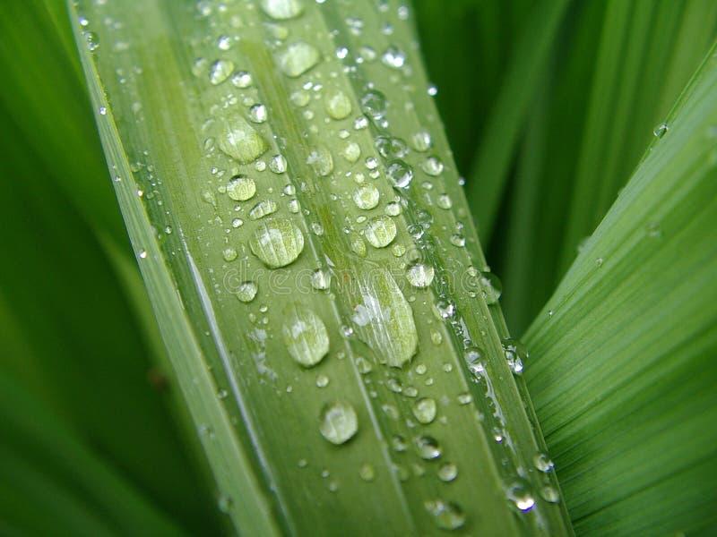 De macro van het water op groen blad 2 stock afbeeldingen