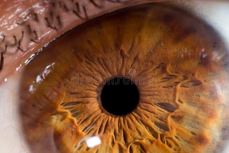 Download De Macrobol Van Het Close-upoog Stock Afbeelding - Afbeelding bestaande uit looking, iris: 107701217